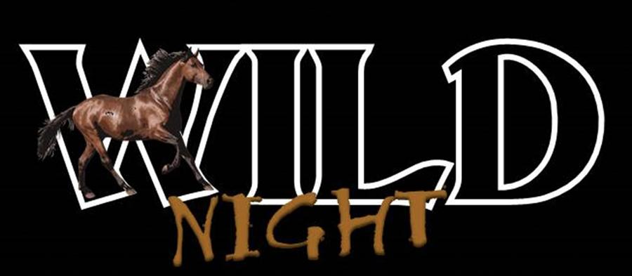 Salt River Wild Horses Wild Night Event