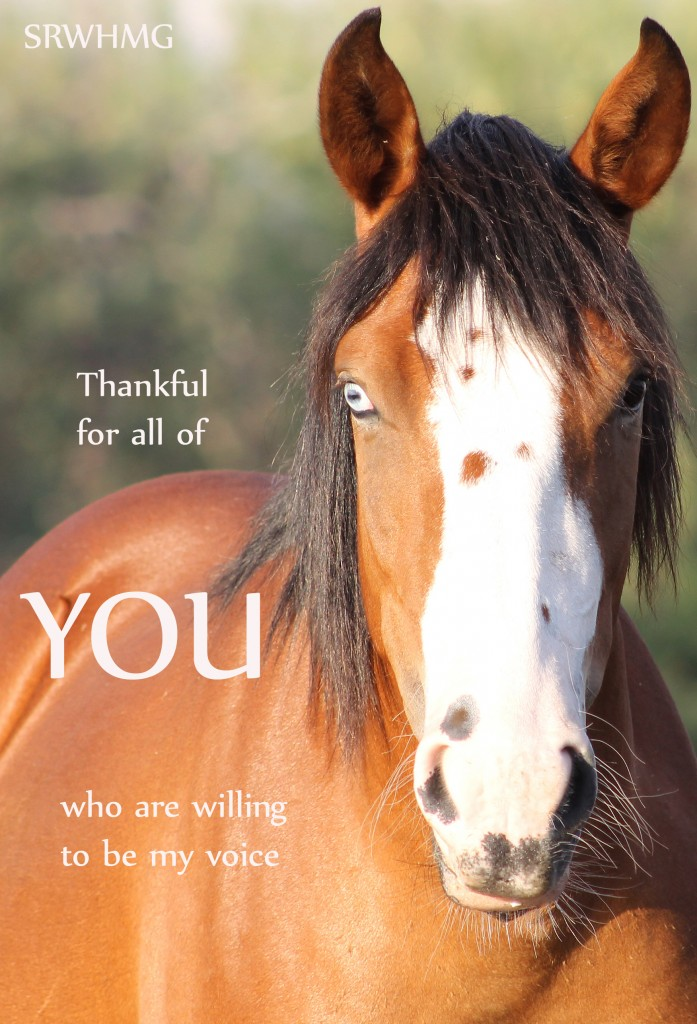 What You Can Do Salt River Wild Horse Management Group