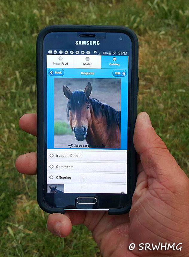 wild-horse-app
