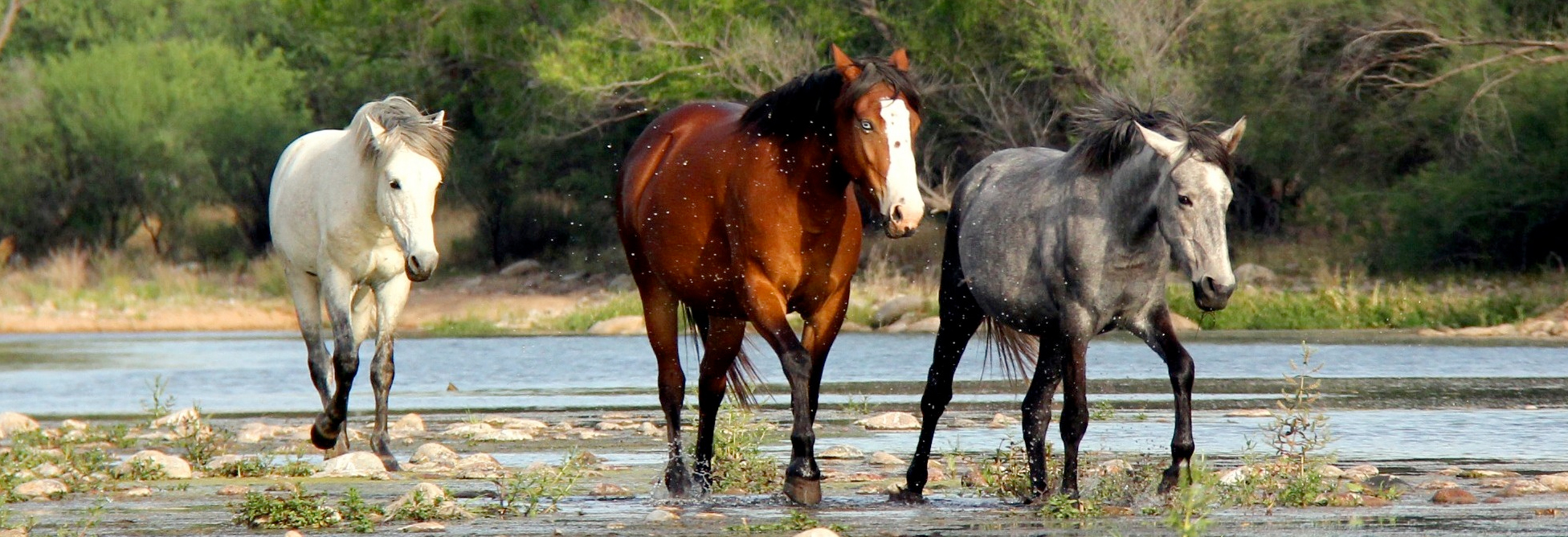save the salt river wild horses