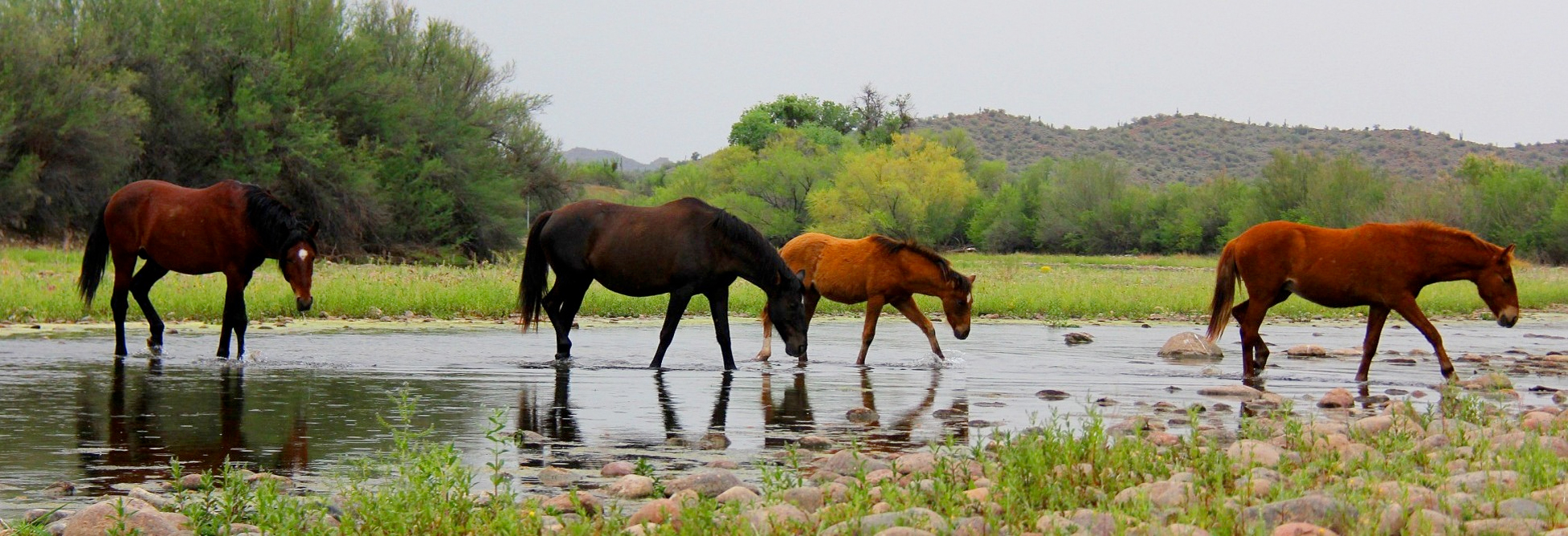 Wild Horse Viewing Guidelines