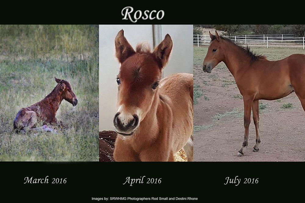 Sponsor Salt River Wild Horse
