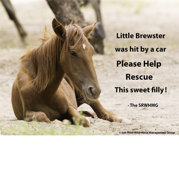 donate to help save brewster