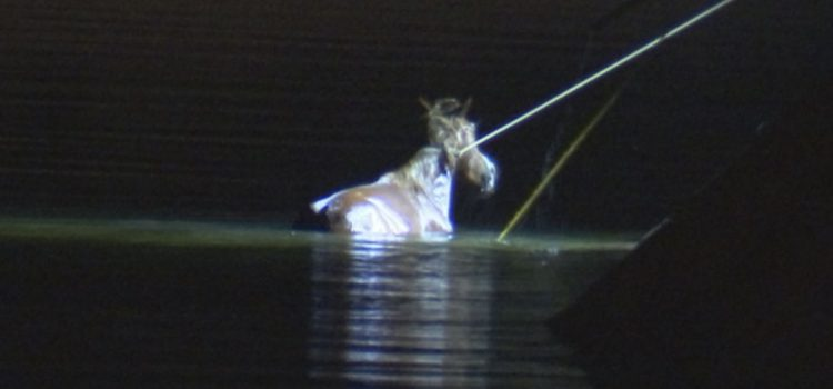 Salt River Wild Horse and her Baby Saved from Canal Near Mesa