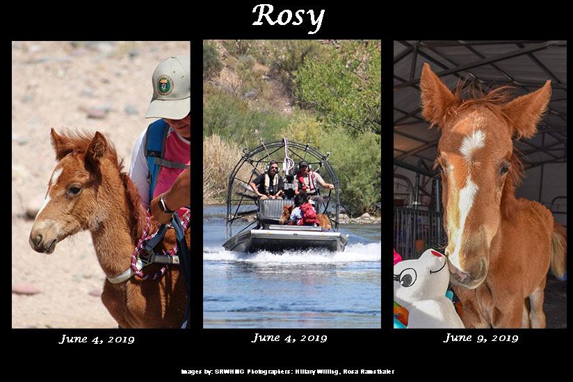 Sponsor Rosy