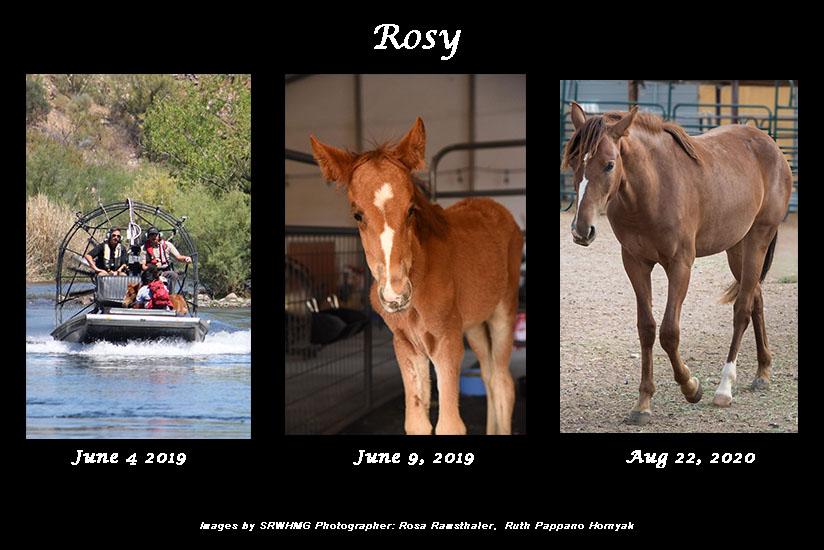 Sponsor Rosy SRWHMG