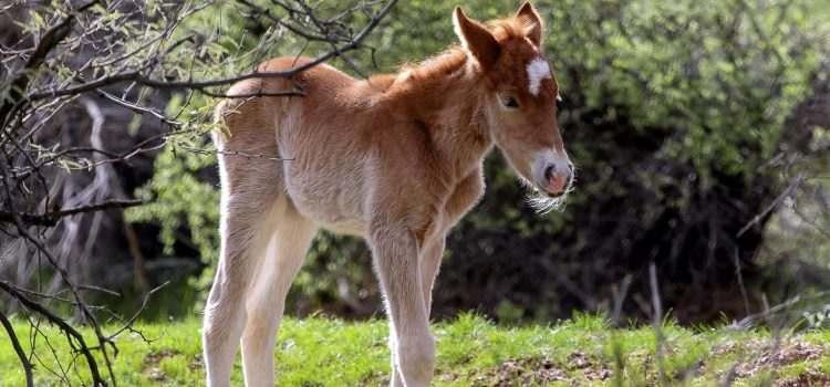 """First Colt of 2017 Named """"Ducey"""""""