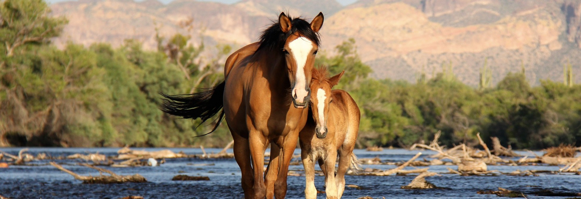 Wild horses in the united states