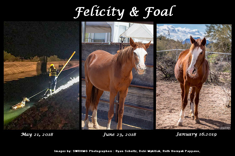 felicity and foal srwhmg