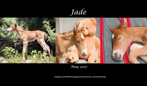 Sponsor Jade
