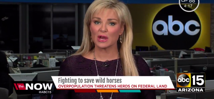 ABC Arizona: Fighting to Save Wild Horses