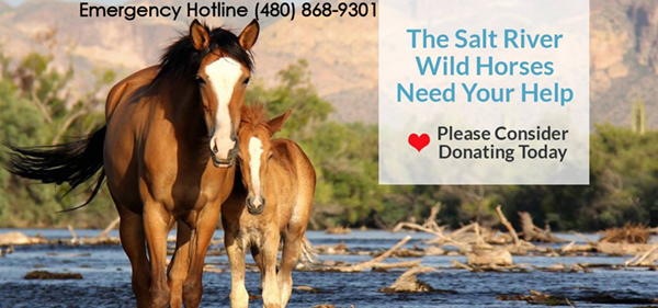 donation to salt river wild horses