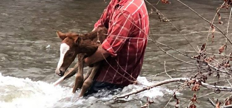 FOAL AND ITS RESCUERS RESCUED!