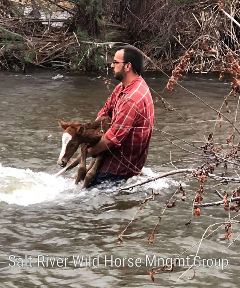 Horse River Rescue