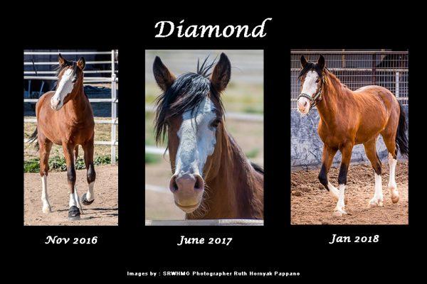 Sponsor Diamond