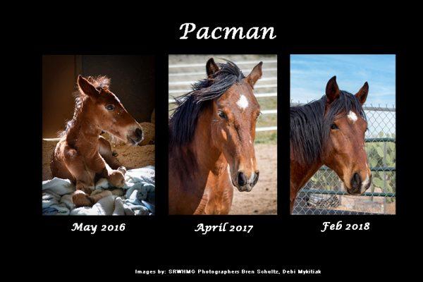 Sponsor Pacman