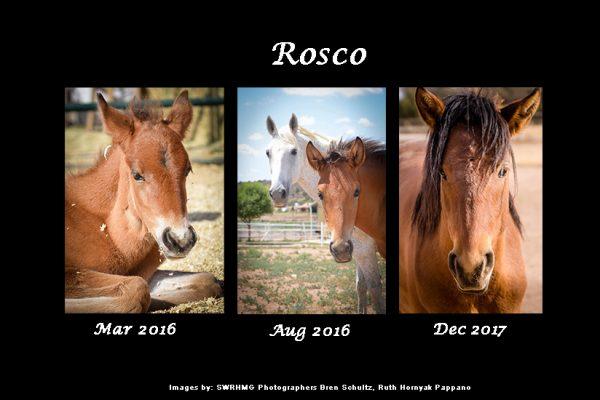 Sponsor Roscoe