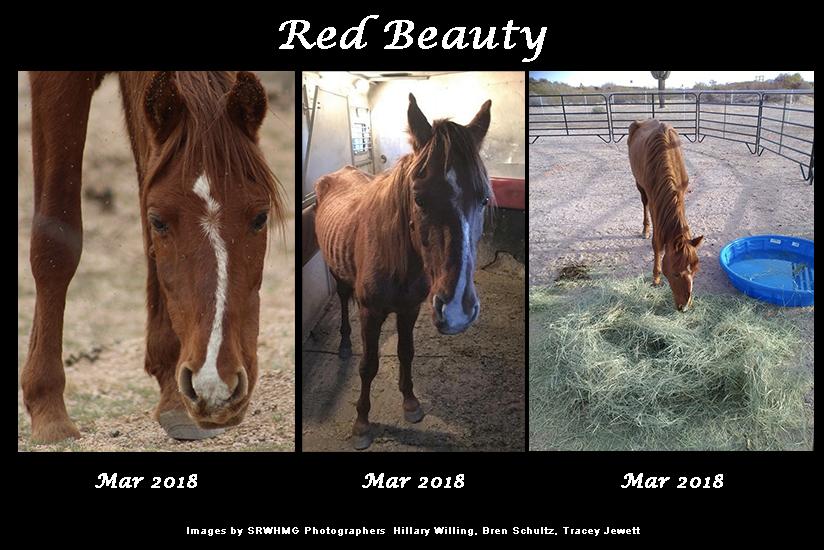 Sponsor Red Beauty