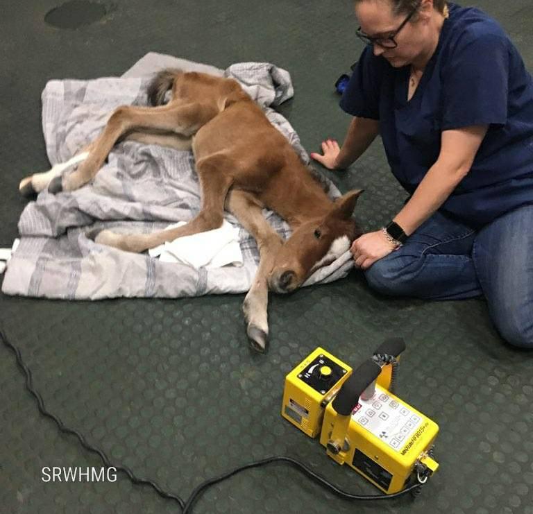 Arizona horse rescue