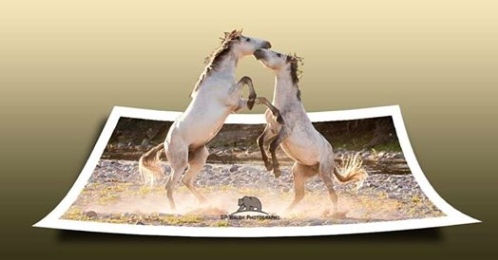 Protection of The Historic and Beautiful Salt River Wild Horses