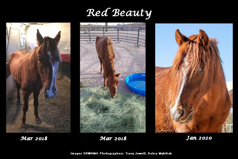sponsor red beauty srwhmg