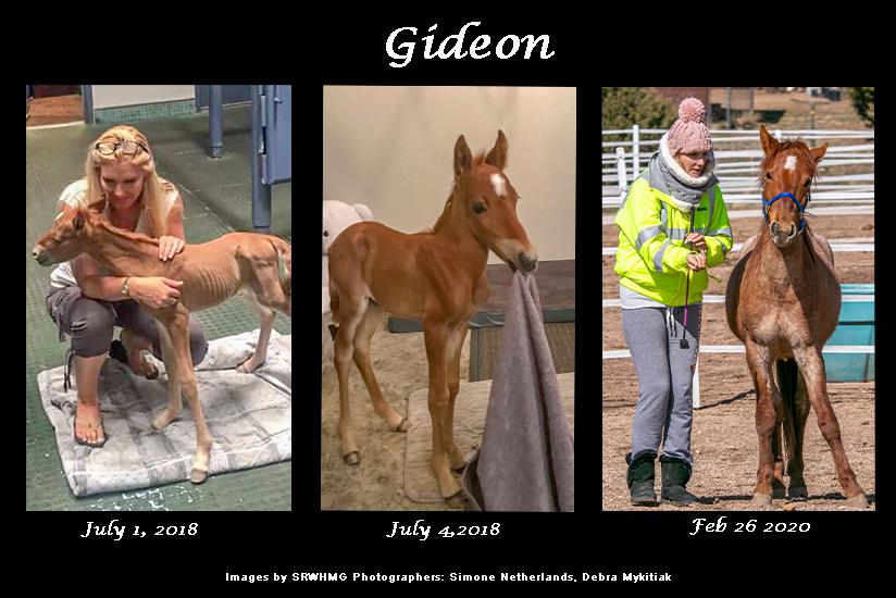 sponsor Gideon SRWHMG