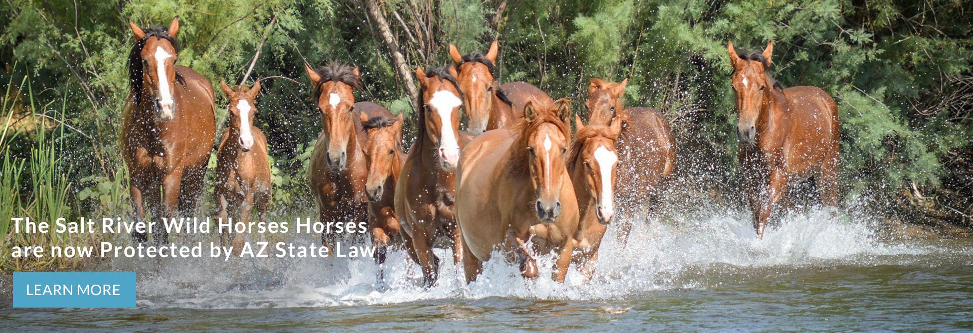 Salt River Wild Horse Management Group Srwhmg
