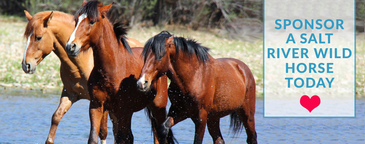 History of Wild Horses - Salt River Wild Horse Management Group