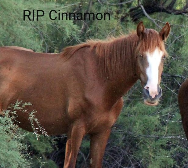 RIP Cinnamon