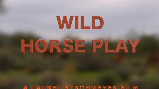 wild horseplay video