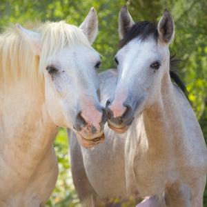 AZ horse prints