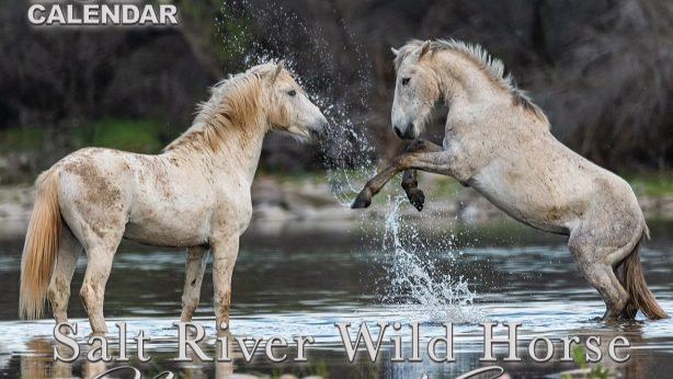 Salt River Wild Horse Management Group Calendar 2021