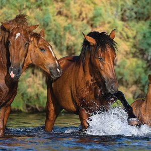 salt river wild horse note card