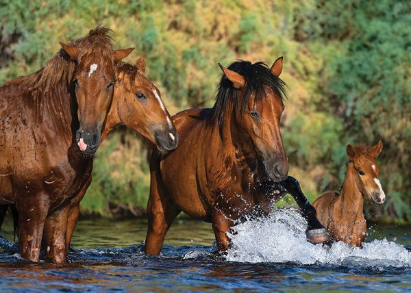 salt river wild horse note card