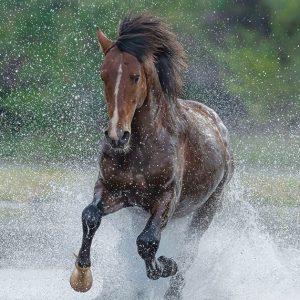 salt river wild horse note cards