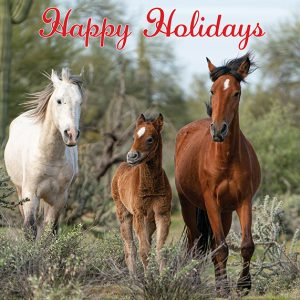 Happy Holidays Salt River Wild Horse Greeting Card