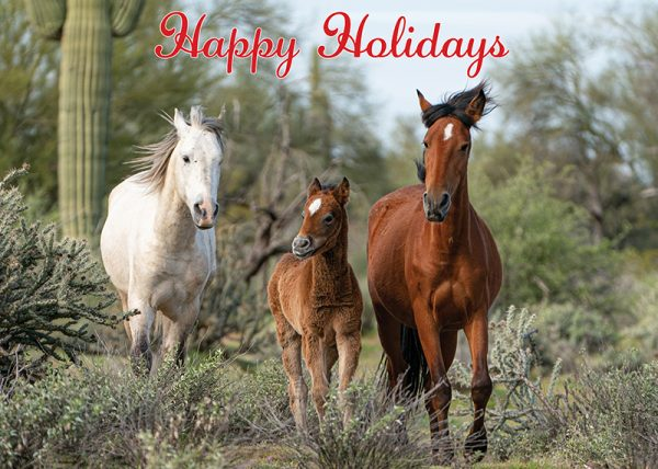 salt river wild horse holiday greeting card