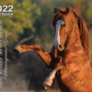 2022 Salt River Wild Horse Management Group Calendar